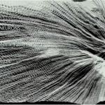mirrorneurons