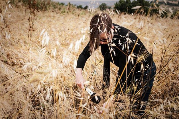 francejobin_wheat